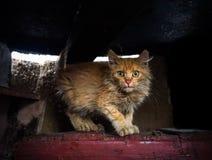 Κοκκινομάλλης γάτα Φρίκη στα μάτια Στοκ εικόνες με δικαίωμα ελεύθερης χρήσης
