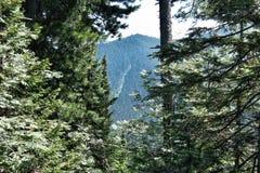 Κοκκώδες βουνό στοκ φωτογραφίες με δικαίωμα ελεύθερης χρήσης