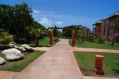 Κοκοφοίνικες Κούβα Cayo Στοκ φωτογραφία με δικαίωμα ελεύθερης χρήσης