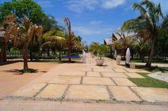Κοκοφοίνικες Κούβα Cayo Στοκ Φωτογραφία