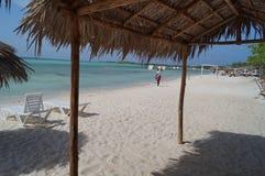 Κοκοφοίνικες της Κούβας Cayo Στοκ εικόνα με δικαίωμα ελεύθερης χρήσης