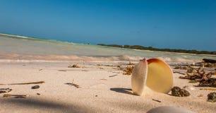 Κοκοφοίνικες Cayo, Κούβα στοκ φωτογραφίες