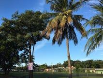 Κοκοφοίνικες EL Playa σε Guanacaste, Κόστα Ρίκα Στοκ φωτογραφίες με δικαίωμα ελεύθερης χρήσης