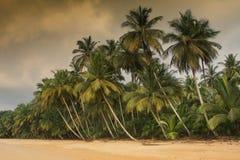 Κοκοφοίνικες Praia, Σάο Τομέ και Πρίντσιπε, Αφρική στοκ εικόνες με δικαίωμα ελεύθερης χρήσης