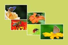 Κολάζ άνοιξη με τα ανθίζοντας φυτά και τα έντομα για το projec σας στοκ φωτογραφίες