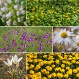 Κολάζ με τα λουλούδια υπαίθρια, θέμα άνοιξη στοκ φωτογραφία με δικαίωμα ελεύθερης χρήσης