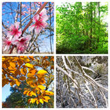 κολάζ τέσσερις εποχές Στοκ φωτογραφίες με δικαίωμα ελεύθερης χρήσης