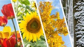 Κολάζ τεσσάρων εποχών - άνοιξη, καλοκαίρι, φθινόπωρο, χειμώνας Στοκ φωτογραφία με δικαίωμα ελεύθερης χρήσης