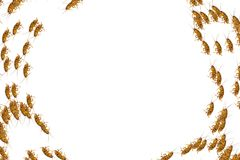 Κολάζ των νεκρών κατσαρίδων στο άσπρο υπόβαθρο Στοκ εικόνα με δικαίωμα ελεύθερης χρήσης