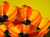 κολάζ Στοκ εικόνα με δικαίωμα ελεύθερης χρήσης