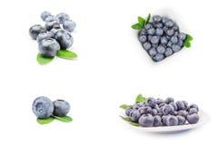 Κολάζ huckleberry Στοκ φωτογραφίες με δικαίωμα ελεύθερης χρήσης