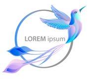 κολίβριο Διανυσματική απεικόνιση του πουλιού Colibri Στοκ Φωτογραφίες