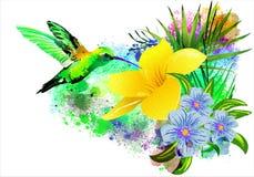 Κολίβριο πέρα από ένα τροπικό λουλούδι ελεύθερη απεικόνιση δικαιώματος