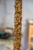 Κολλητική ταινία με τις νεκρές μύγες Στοκ φωτογραφίες με δικαίωμα ελεύθερης χρήσης