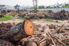 Κολοβώματα δέντρων καρύδων Στοκ εικόνες με δικαίωμα ελεύθερης χρήσης
