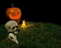 Κολοκύθα αποκριών, ανθρώπινο κρανίο, ζωικό κρανίο, και κεριά glowin Στοκ εικόνα με δικαίωμα ελεύθερης χρήσης