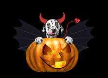 Κολοκύθα αποκριών με το χαριτωμένο σκυλί στο κοστούμι ροπάλων - που απομονώνεται στο Μαύρο Στοκ Εικόνες