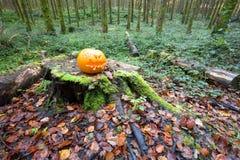 Κολοκύθα αποκριών στο δάσος πεύκων Στοκ φωτογραφία με δικαίωμα ελεύθερης χρήσης