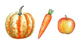Κολοκύθα, καρότο και μήλο Watercolor συρμένη χέρι ζωηρόχρωμη στο μόριο ελεύθερη απεικόνιση δικαιώματος