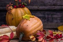 Κολοκύθα, κολοκύνθη Ευτυχής ανασκόπηση ημέρας των ευχαριστιών Κολοκύθες ημέρας των ευχαριστιών φθινοπώρου πέρα από το ξύλινο υπόβ Στοκ Εικόνες