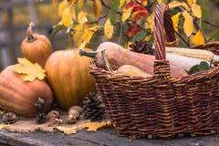 Κολοκύθα, κολοκύνθη Ευτυχής ανασκόπηση ημέρας των ευχαριστιών Κολοκύθες ημέρας των ευχαριστιών φθινοπώρου πέρα από το ξύλινο υπόβ Στοκ Φωτογραφία