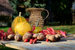 Κολοκύθα λαχανικών φθινοπώρου, καρύδια και πλεγμένη κανάτα Στοκ φωτογραφίες με δικαίωμα ελεύθερης χρήσης