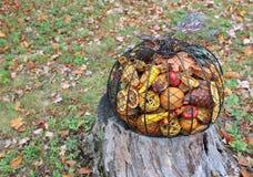 Κολοκύθα μετάλλων που γεμίζουν με το χρώμα της πτώσης Στοκ φωτογραφίες με δικαίωμα ελεύθερης χρήσης