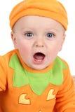 κολοκύθα μωρών Στοκ Εικόνες