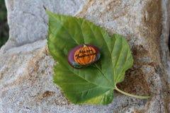 Κολοκύθα που χρωματίζεται σε έναν μικρό βράχο Στοκ φωτογραφία με δικαίωμα ελεύθερης χρήσης