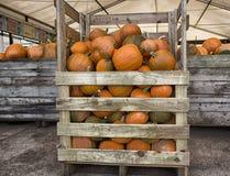 Κολοκύθες έτοιμες για την πώληση σε ένα αγρόκτημα στοκ φωτογραφία με δικαίωμα ελεύθερης χρήσης