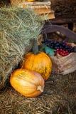 Κολοκύθες η κινηματογράφηση σε πρώτο πλάνο ανασκόπησης φθινοπώρου χρωματίζει το φύλλο κισσών πορτοκαλί στοκ φωτογραφία