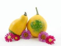 κολοκύθες λουλουδ&iota Στοκ εικόνες με δικαίωμα ελεύθερης χρήσης