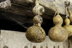 Κολοκύθες που τοποθετούνται ξηρές για τη διακόσμηση Στοκ φωτογραφία με δικαίωμα ελεύθερης χρήσης