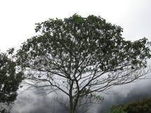 Κολομβιανό πάρκο δέντρων Στοκ Εικόνα