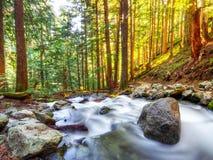 Κολπίσκος βουνών Pacific Northwest στοκ φωτογραφίες με δικαίωμα ελεύθερης χρήσης