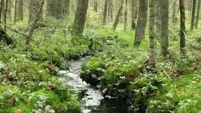 Κολπίσκος στο άγριο δάσος φιλμ μικρού μήκους