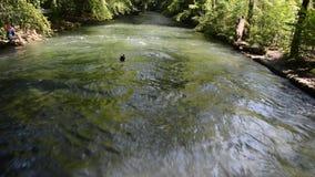 Κολυμβητές στη γρήγορη κίνηση Eisbach, μικρά προκαλούμενα από τον άνθρωπο 2km μακριά γρήγορα ορμητικά σημεία ποταμού μέσα στους α απόθεμα βίντεο