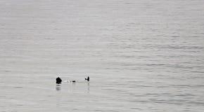 Κολυμβητής θάλασσας κατά τη διάρκεια του χειμώνα Στοκ εικόνες με δικαίωμα ελεύθερης χρήσης