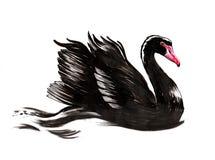 Κολυμπώντας μαύρος κύκνος Στοκ Φωτογραφία