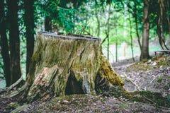 Κολόβωμα δέντρων αγγλικό δασικό στενό σε επάνω με το φύλλωμα στοκ φωτογραφία με δικαίωμα ελεύθερης χρήσης