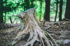 Κολόβωμα δέντρων δασικό στενό σε επάνω Κλάδοι και δέντρα στοκ φωτογραφία