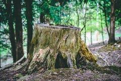 Κολόβωμα δέντρων δασικό στενό σε επάνω με το φύλλωμα στοκ φωτογραφία με δικαίωμα ελεύθερης χρήσης