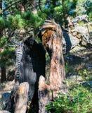 Κολόβωμα δέντρων εγκαυμάτων έξω στο δύσκολο εθνικό πάρκο βουνών Στοκ φωτογραφία με δικαίωμα ελεύθερης χρήσης