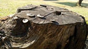 Κολόβωμα δέντρων με τα μανιτάρια Στοκ εικόνα με δικαίωμα ελεύθερης χρήσης