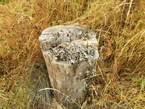 Κολόβωμα δέντρων με το μύκητα και τις καφετιές χλόες στοκ φωτογραφίες με δικαίωμα ελεύθερης χρήσης