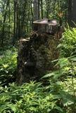 Κολόβωμα δέντρων με το φίλο κρίνων τιγρών μέσα στοκ εικόνα με δικαίωμα ελεύθερης χρήσης