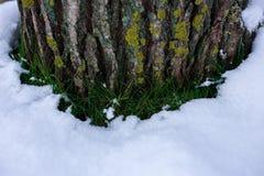 Κολόβωμα δέντρων με το χιόνι και τη χλόη στοκ φωτογραφίες