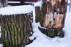 Κολόβωμα δέντρων με το χιόνι και τη χλόη στοκ εικόνες με δικαίωμα ελεύθερης χρήσης