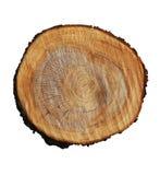 Κολόβωμα δέντρων στοκ εικόνα με δικαίωμα ελεύθερης χρήσης