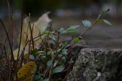 Κολόβωμα, μακρο φωτογραφία στοκ εικόνα με δικαίωμα ελεύθερης χρήσης